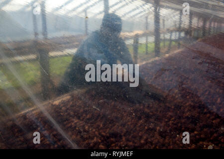 Cocoa drying near Agboville, Ivory Coast. - Stock Photo