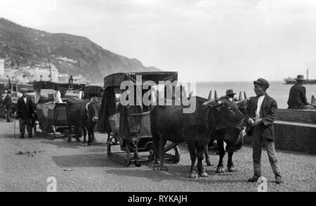 geography / travel, Portugal, Funchal, Madeira, transport / transportation, oxen sleighs, picture postcard, circa 1940, Additional-Rights-Clearance-Info-Not-Available - Stock Photo