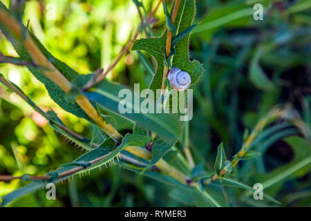 snail on outside plant - Stock Photo