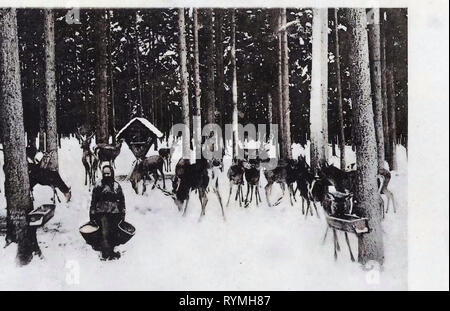 Tharandter Wald, Postcards of deer, Cratches in Germany, 1908, Landkreis Mittelsachsen, Hetzdorf, Herrndorf, Wildfütterung im Tharandter Wald Stock Photo