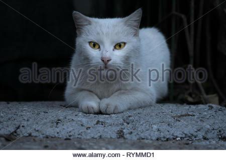Elegant white cat. Expression, animals - Stock Photo