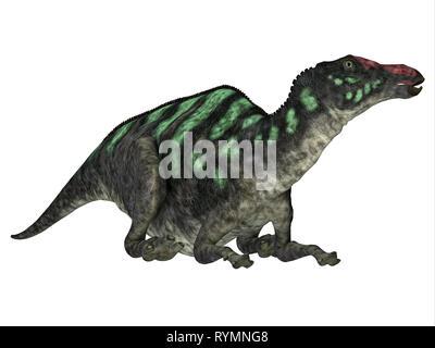 Maiasaurus Dinosaur Head - Maiasaurus was a large herbivorous dinosaur that lived in Montana during the Cretaceous Period. - Stock Photo