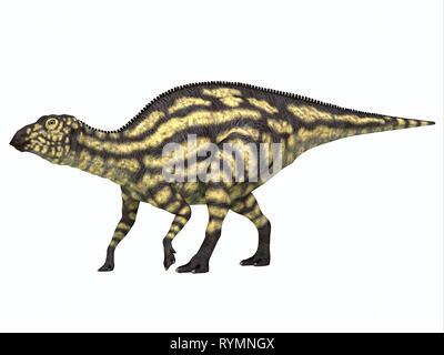 Maiasaurus Dinosaur Young Juvenile - Maiasaurus young juvenile was a herbivorous dinosaur that lived in Montana during the Cretaceous Period. - Stock Photo