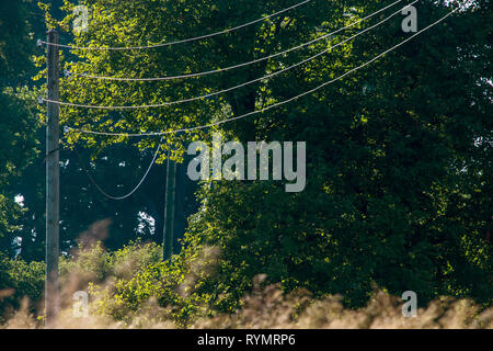High-voltage power line on wooden poles glade near the forest. Electricity poles in field. Grass, forest and blue sky background, Latvia. - Stock Photo