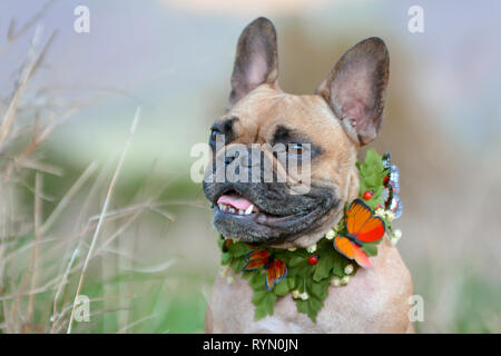 Beautiful fawn and black mask female French Bulldog dog with a self made leaf and butterfly collar in front of blurry background - Stock Photo