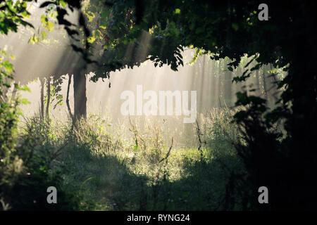 Light and shadow under a vineyard in a beautiful misty morning - Stock Photo