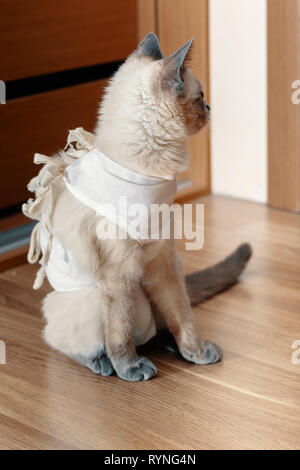 The cat in the postoperative bandage is sitting on the floor. - Stock Photo
