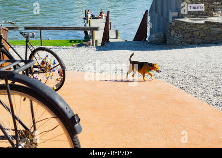 CROMWELL, NEW ZEALAND - OCTOBER 21 2019; Old bicyle wheels and dog crossing sstreet in small town with group four youth in distance on jetty on Lake D - Stock Photo