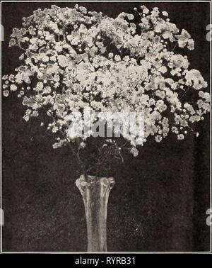 Dreer's midsummer list 1929 (1929) Dreer's midsummer list 1929 . dreersmidsummerl1929henr Year: 1929  Double-flowering Gypsophila Gaill.rdl Gr-i^ndiflora GeUm (Avens) PER PKT. 2541 Atrosanguineum Fl. PI. Beautiful hardy peren- nial, bearing profusely large, showy double dark- crimson flowers all through the summer; an elegant flower for bouquets;'18 inches, j oz., 50 cts SO 10 2542 Mrs. Bradshaw. Large double brilliant orange scarlet; in flower throughout the entire summer 15 2543 Lady Stratheden. New double-flowering golden-yellow. 5 pkts., Sl.OO 25 Grevillea (suk oak) 2681 Robusta. A very  - Stock Photo