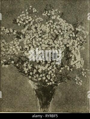 Dreer's mid-summer list 1925 (1925) Dreer's mid-summer list 1925 . dreersmidsummerl1925henr Year: 1925  Gaillardia Grandiflora 10 Geum (Avens) 2541 Atrosanguineum Fl. PI. Beautiful hardy peren- nial, bearing profusely large, showy double dark-crim- son flowers all through the summer; an elegant flower for bouquets.  oz., 50 cts 10 2542 Mrs. Bradshaw. Large double brilliant orange scarlet; in flower throughout the entire summer 15 Grevillea (SiikOak) per pkt. 2681 Robusta. A very beautiful and graceful decorative plant with fern-like foliage; excellent for table deco- ration; easily raised fro - Stock Photo