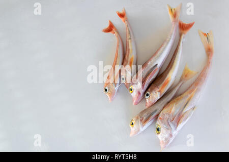 Brightly colored sea fish - Red Gurnard, on white background Scientific name: Chelidonichthys cuculus - Stock Photo