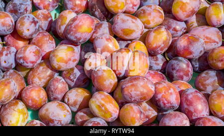 Lots of fresh plums on the basket. A deciduous tree it includes many varieties of the fruit trees known as plums in English though not all plums belon - Stock Photo