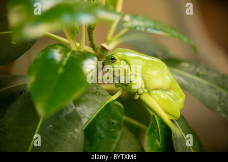 Green frog on a tree - Stock Photo
