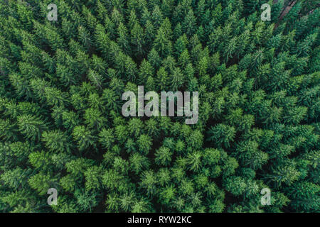 Green conifer treetops in forest - Aerial view, Germany - Stock Photo