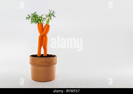 Verliebte Karotten im Blumentopf - umarmende Mohrrüben, gelbe Rüben - Stock Photo