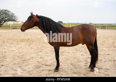 Horse on nature. Portrait of a horse, brown horse - Stock Photo