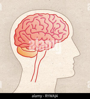 Human Anatomy drawing - Profile Head with BRAIN side view - Stock Photo