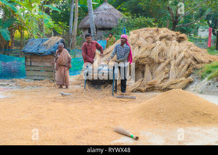 DAYAPUR, SUNDARBANS, INDIA. December 7-2015. Two men threshing bundles of rice on their farm with a threshing machine - Stock Photo