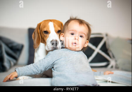 Baby with a Beagle dog in home. Family friendly dog in house. - Stock Photo