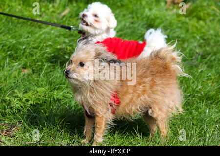 Finsbury park, London, UK. 15th Mar, 2019. Dogs in Finsbury Park on a very windy day. Credit: Dinendra Haria/Alamy Live News - Stock Photo