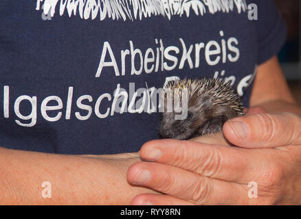 Working group to  protect hedgehogs, Berlin, Germany - Stock Photo