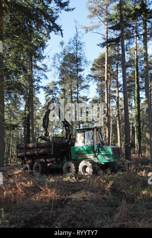 Forwarder collecting felled timber Frame Heath Inclosure New Forest National Park Hampshire England UK - Stock Photo