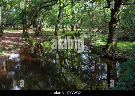 Ober Water stream near Ober Corner, New Forest National Park, Hampshire, England, UK, October 2017 - Stock Photo