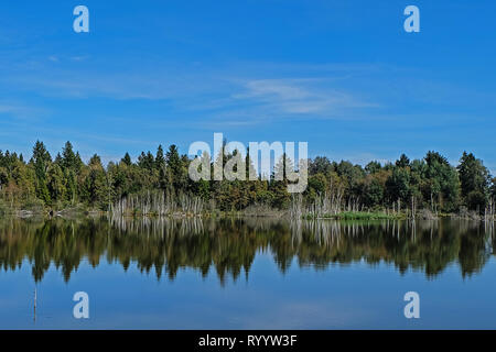 pond in the odenwald, reflection of dead trees - Stock Photo