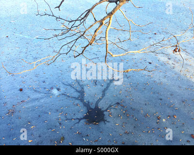 A low hanging branch casts a shadow on the frozen waters of Prospect Park Lake in Brooklyn, New York. - Stock Photo
