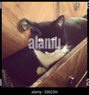 Cat in dresser drawer - Stock Photo