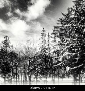Snow covered trees after winter storm in London, Ontario, Canada. - Stock Photo