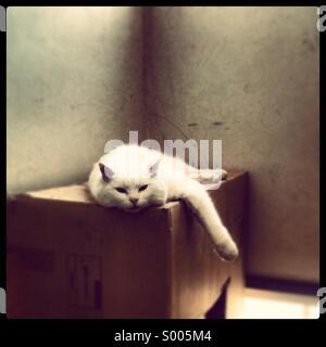 White cat sitting on cardboard box in tenement landing - Stock Photo