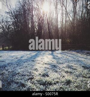 Low winter sun shining through trees and creating shadows on a patch of grass which is covered with a harsh frost - Stock Photo