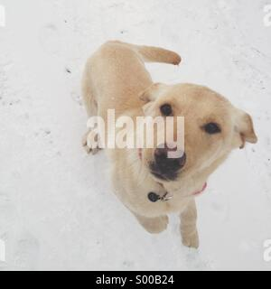 Dog in snow jumping - Stock Photo