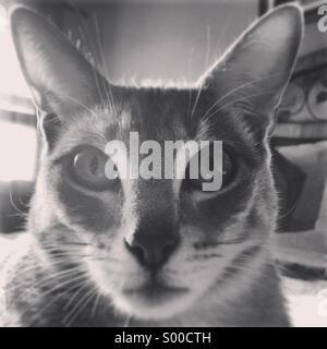 Feline Close Up - Stock Photo