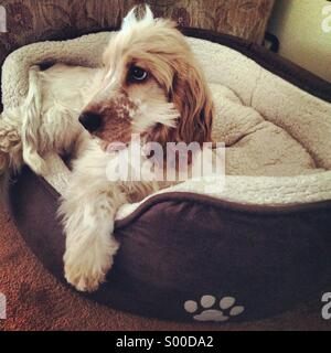 Puppy in his bed - Stock Photo