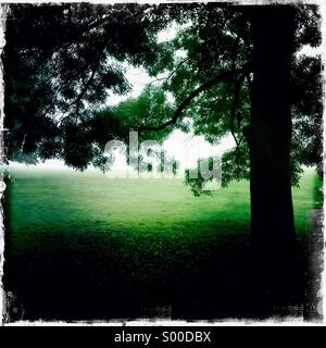 High contrast colour photo of old oak tree in a park. Square format. London UK - Stock Photo