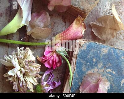 Fading flowers and old book textures - Stock Photo