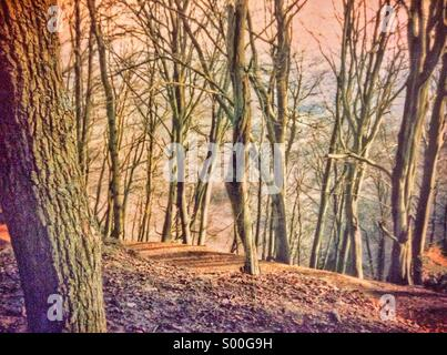 Forest in winter at dusk - Stock Photo