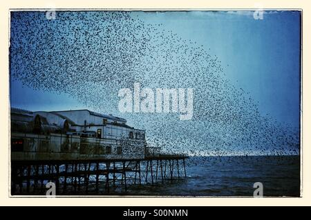 starlings roosting on Aberystwyth pier wales uk - Stock Photo