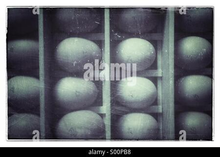 Rows of fresh chicken eggs in a wooden box - Stock Photo