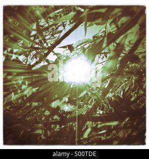 Sun shining through a willow tree. - Stock Photo