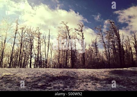 Winter trees on snowy mound - Stock Photo