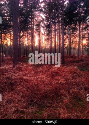 Evening in the Forest - Stock Photo