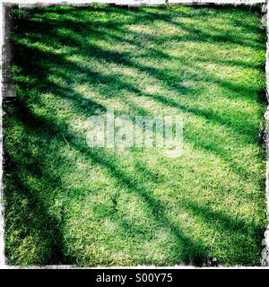 Abstract shadow of tree branches on green grass. Hipstamatic, iPhone. - Stock Photo