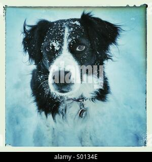 Snowy dog - Stock Photo