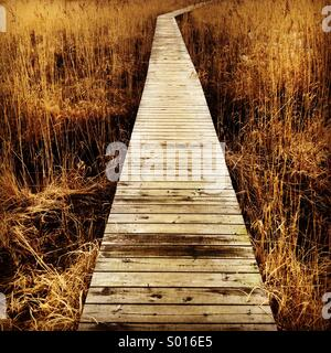 A wooden walkway through fields of reeds - Stock Photo