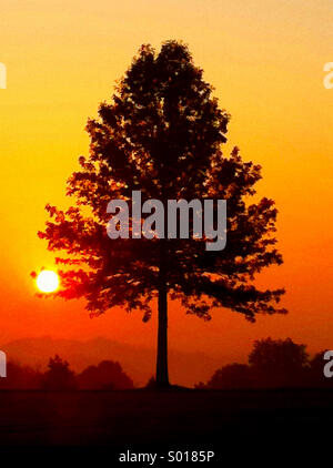 A silhouette of a tree set against an orange morning sunrise - Stock Photo