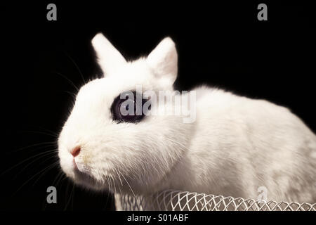 White rabbit in basket - Stock Photo