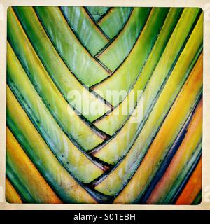 Abstract colorful details of an ornamental palm. - Stock Photo